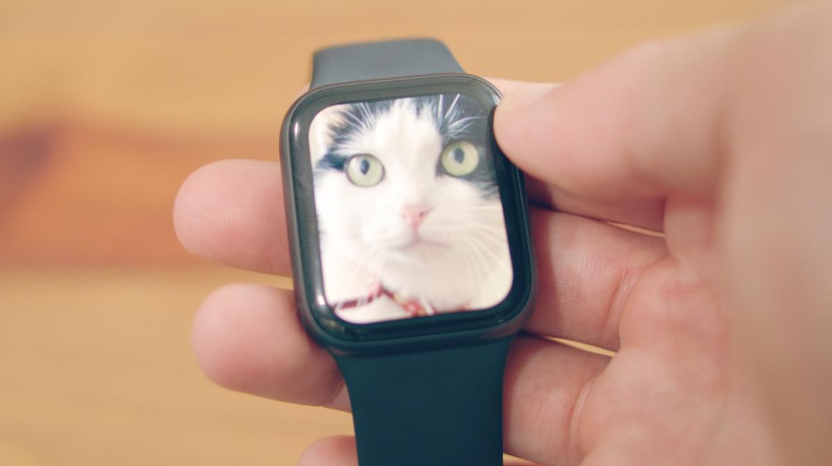 iPhone XSで撮影した愛猫フジの写真をApple Watchに転送してみると、モニターの解像度の高さもあり非常に綺麗に表示される。