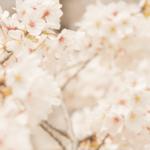 春の花 -2019/5/12
